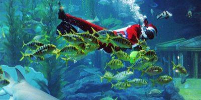 Nadando con peces Foto:Getty Imagaes