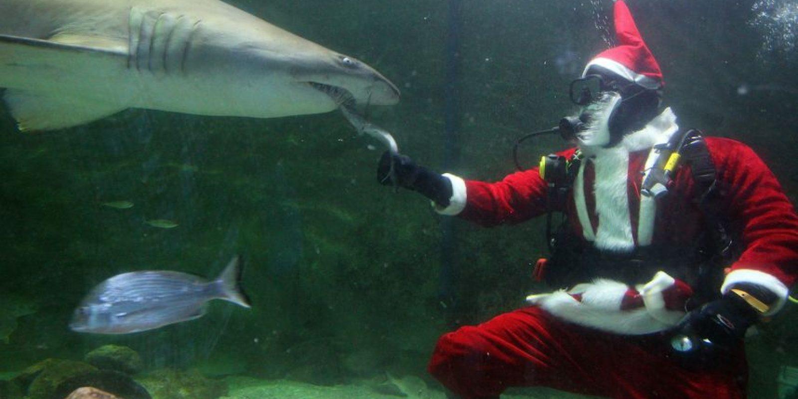 De frente a un tiburón Foto:Getty Imagaes