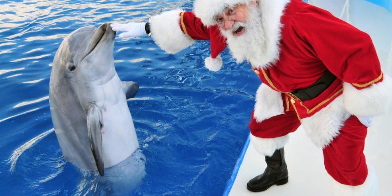 Alimentando a un delfín Foto:Getty Imagaes