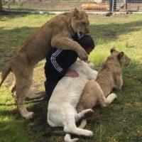 Eduardo ha rescatado a decenas de animales de circos, zoológicos y criadores. Foto:BlackJaguarWhiteTiger vía Instagram
