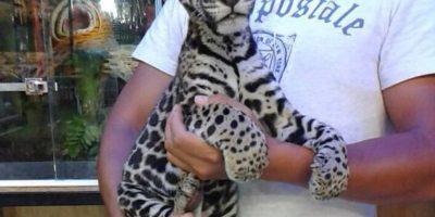 Este es uno de los animales antes de ser rescatado Foto: BlackJaguarWhiteTiger vía Instagram