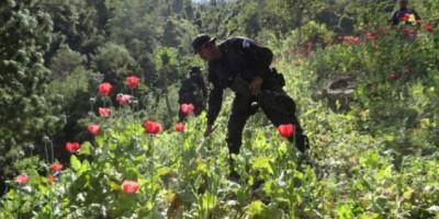 ¿Cuánto le cuesta la lucha contra el narco al país?