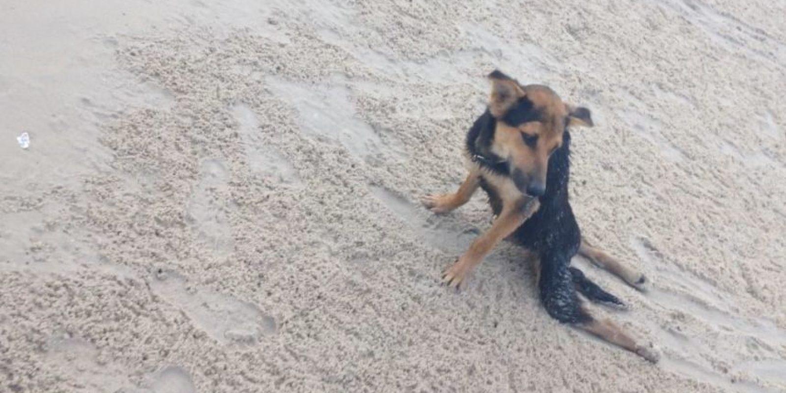 La modelo canadiense Megan Penman encontró a así a Leo en una playa de Tailandia. Foto:HelpSaveLeo/Facebook