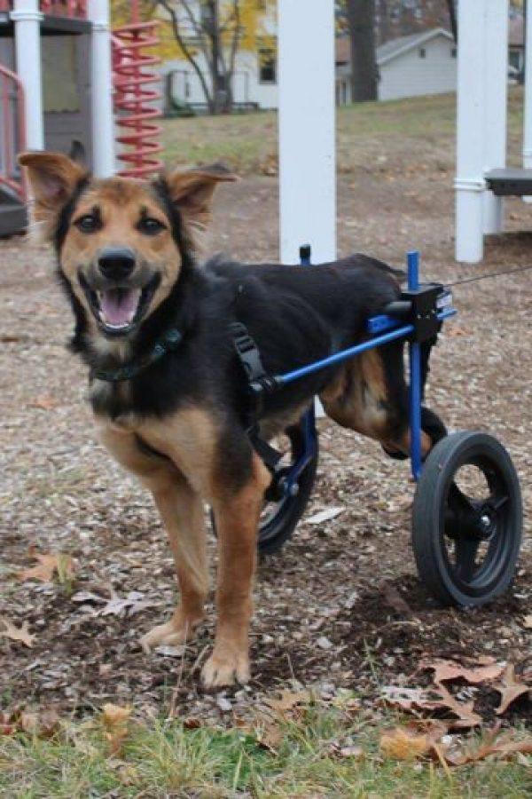 Tiene esta silla de ruedas. Foto:HelpSaveLeo/Facebook