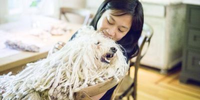 Beast es un perrito que tiene el pelo más hermoso del planeta. Tiene más de dos millones de fans en Facebook. Foto:Facebook