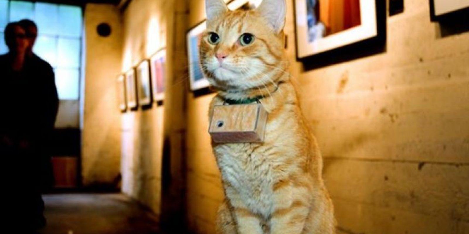 """Este gato """"fotógrafo"""" tiene más de 650 mil seguidores en Facebook. Foto: Facebook"""