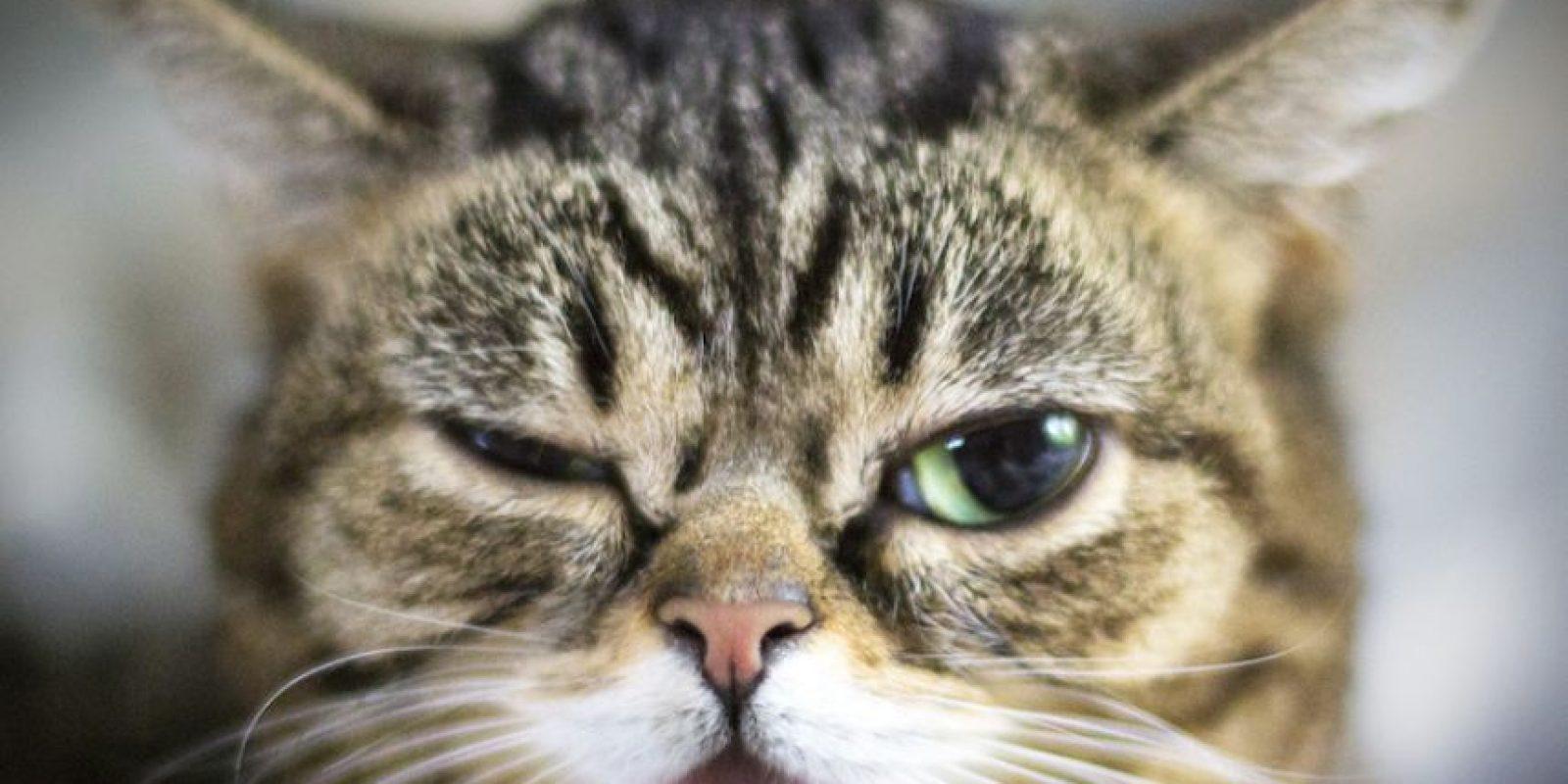 Lil Bub Foto:Facebook