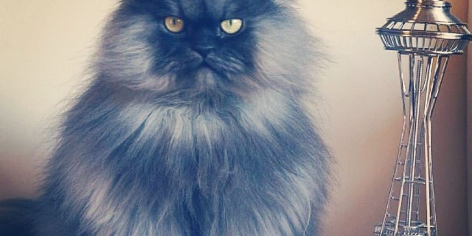 Colonel Meow Foto:Facebook