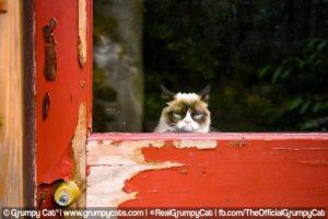 Grumpy Cat es quizás el gato más famoso de Internet. La página oficial de Facebook de esta minina tiene casi siete millones de seguidores. Foto:Facebook