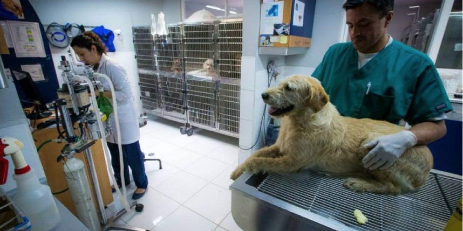 Arthur, el perro que se ganó el corazón de un equipo sueco de atletismo Foto:Team Peak Performance/Facebook