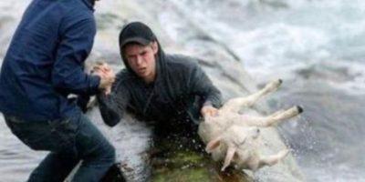 Dos noruegos recuperan a una oveja del mar Foto:Tumblr