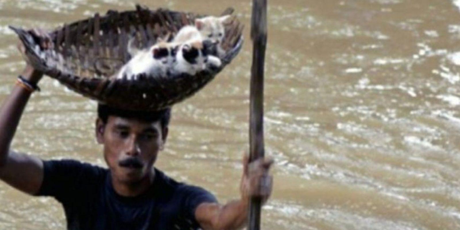 Este indio rescata a unos gatitos en inundación Foto:AP