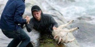 Dos noruegos rescataron esta oveja Foto:Tumblr