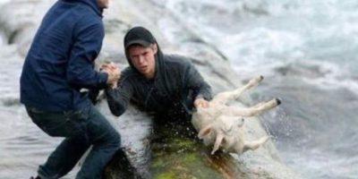 Dos noruegos recuperando a una oveja del mar. Foto:Tumblr