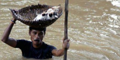 Este hombre indio rescata a unos gatitos en una inundación Foto:AP