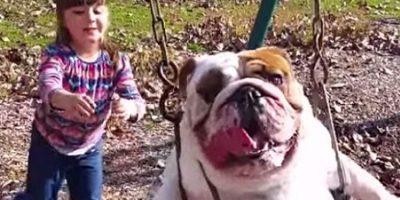 Para reír: Así de bien la pasa un perro en un columpio