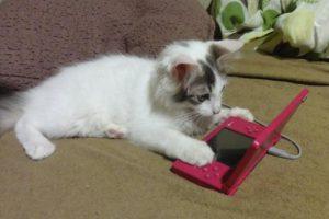 Foto:kotaku.com