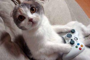 Foto:gatosss.com