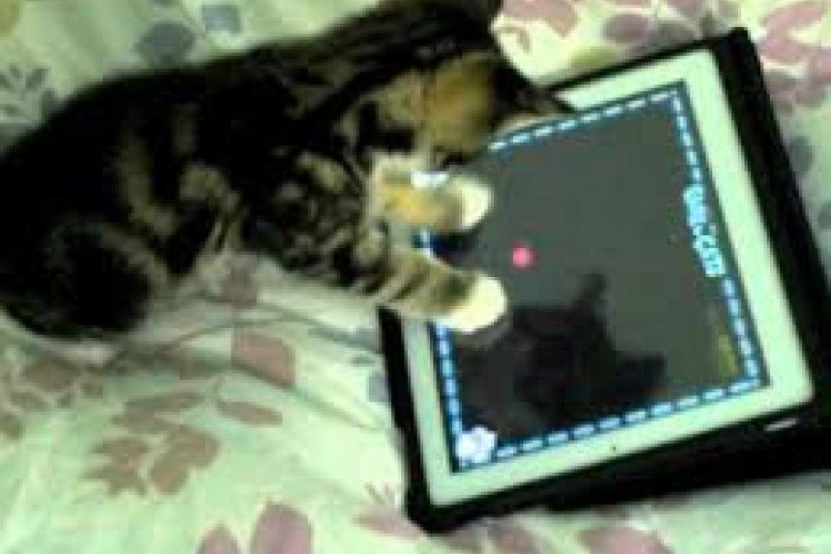 Foto:catladyintraining.com