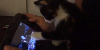 Pura ternura: Una gatita