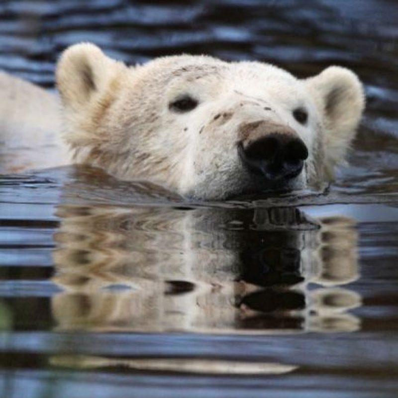 10. De esta forma, los animales se preparan para el invierno. Foto:Getty