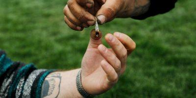 El CBD es un cannabinoide no psicoactivo que también puede ser útil para reducir el dolor y la inflamación Foto:Getty Images