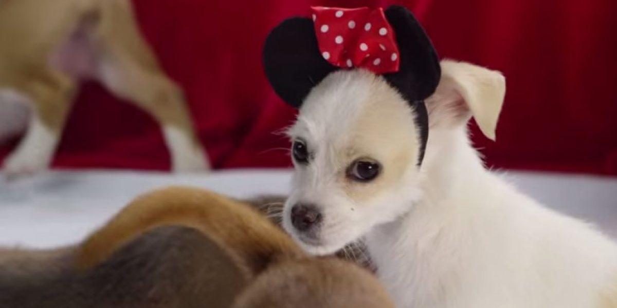 FOTOS Y VIDEO: ¡Qué ternura! Perros disfrazados de personajes de Disney