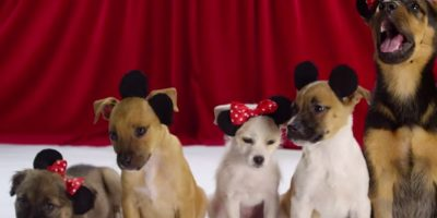 Minnie y Mickey Mouse Foto:Oh My Disney