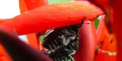 Los escarabajos también entran allí Foto:Getty Images