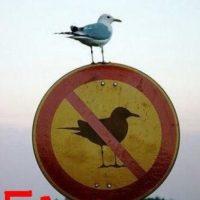 El ave violó el señalamiento Foto:Know Your Meme