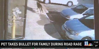 Noah, el perro que dio la vida para salvar a sus dueños de un tiroteo