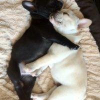 No hay nada mejor que dormir abrazados. Así tal cual. Foto:Lolimages.funvblog.com