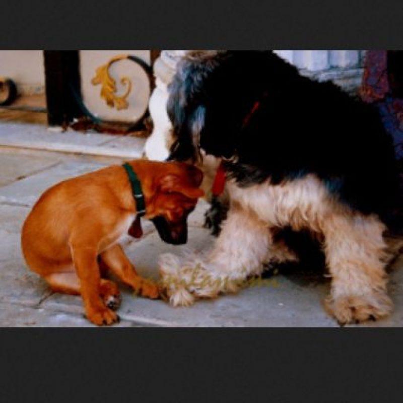 Foto:Petsfans.com