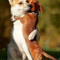 ¡Este sí que es un abrazo sincero! Foto:Tumblr.com/Tagged/perros-amigos