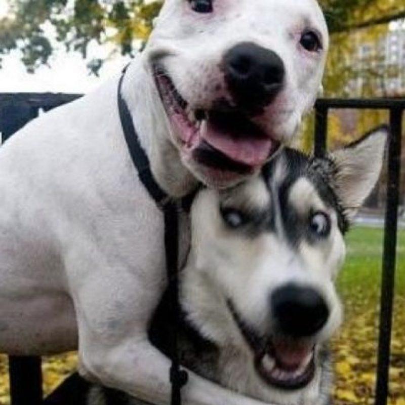 ¡Un abrazo efusivo! Foto:Know Your Meme