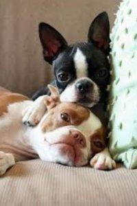 Los perros son los mejores amigos del hombre. Sin embargo, entre ellos también suelen brindarse una amistad incondicional. Foto:Know Your Meme