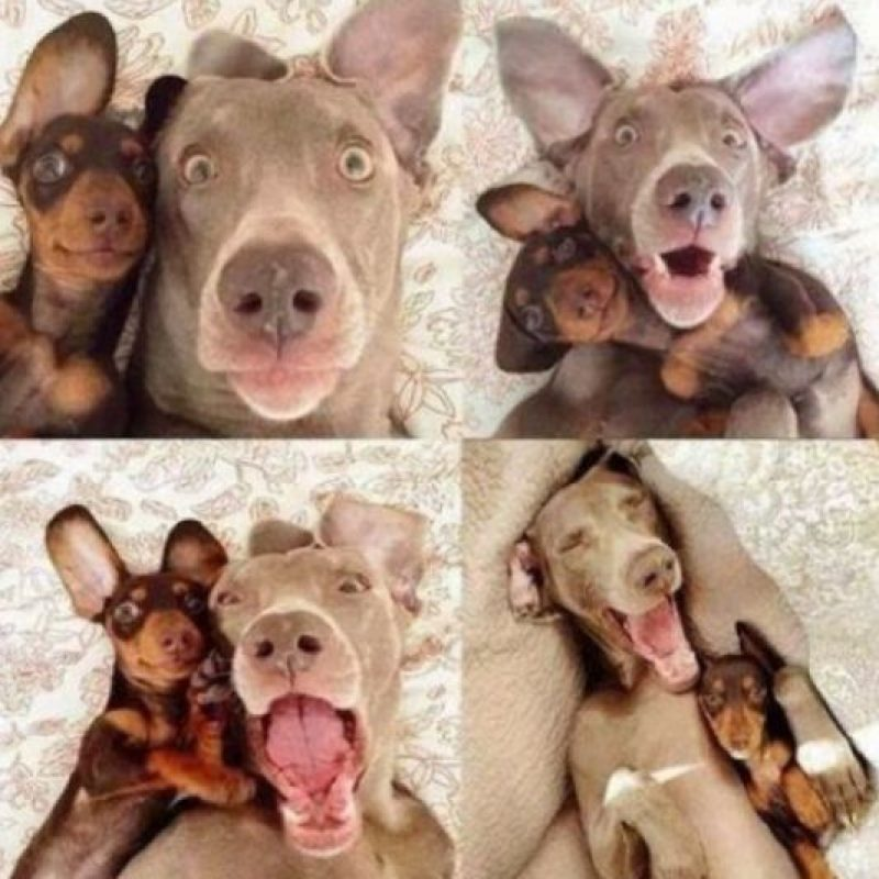 ¡Selfie! Foto:Pinterest