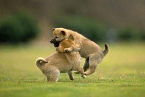 ¡Un abrazo, amigo! Foto:Tumblr.com/Tagged/perros-amigos