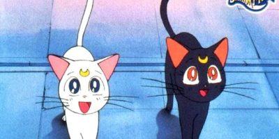 """Los gatos de """"Sailor Moon"""" no tienen mejor suerte. Foto:Toei"""