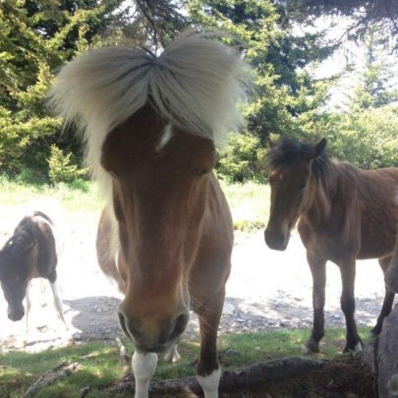 Andy Warhol en un caballo Foto:imgur.com