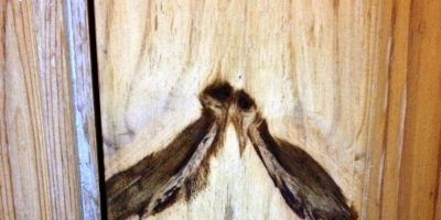 Dos pájaros en un pedazo de madera Foto:imgur.com