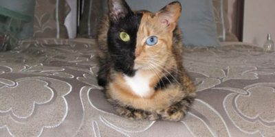 """""""Dos caras"""", villano de Batman, en un gato Foto:imgur.com"""