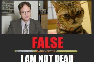 "El personaje de la serie ""The Office"", Dwight Schrute, en un gato Foto:imgur.com"