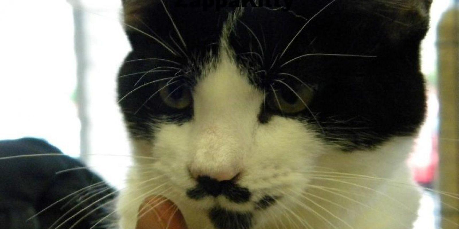 Frank Zappa en un gato Foto:imgur.com