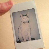 Hitler en un gato Foto:imgur.com