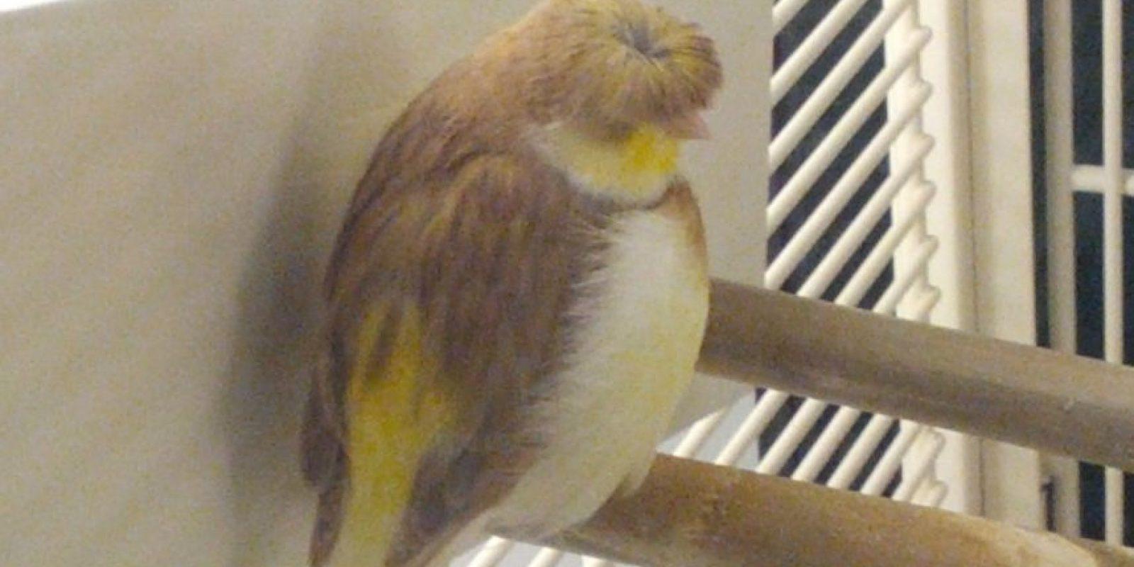 El comediante Chris Farley en un pájaro. Foto:imgur.com
