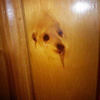 Un perro en una puerta Foto:imgur.com