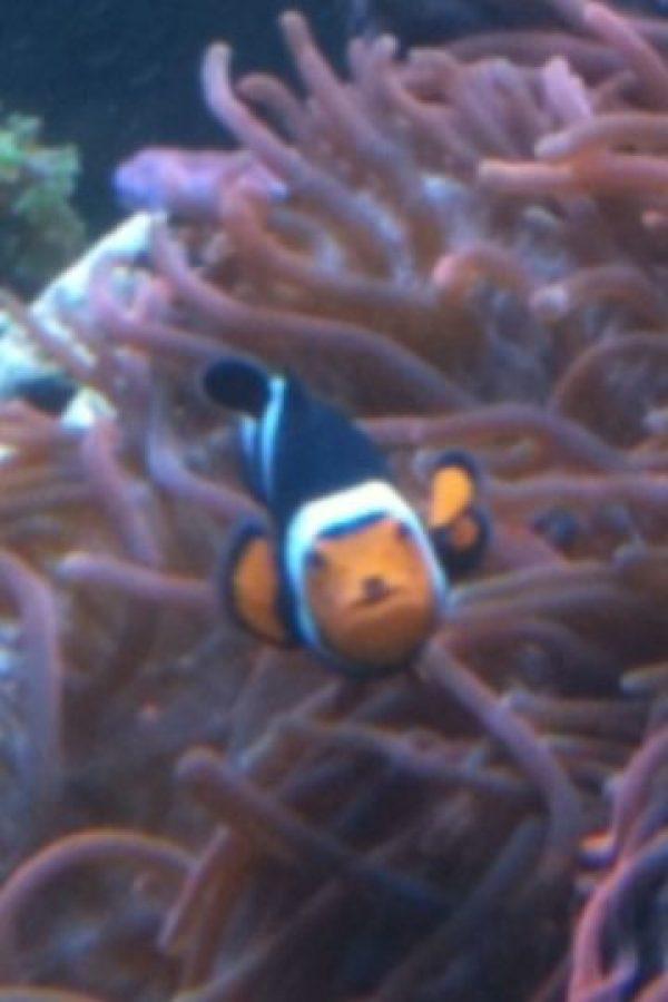 Hitler en un pez Foto:imgur.com