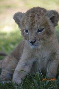 Foto:Cortesía Auto Safari Chapín