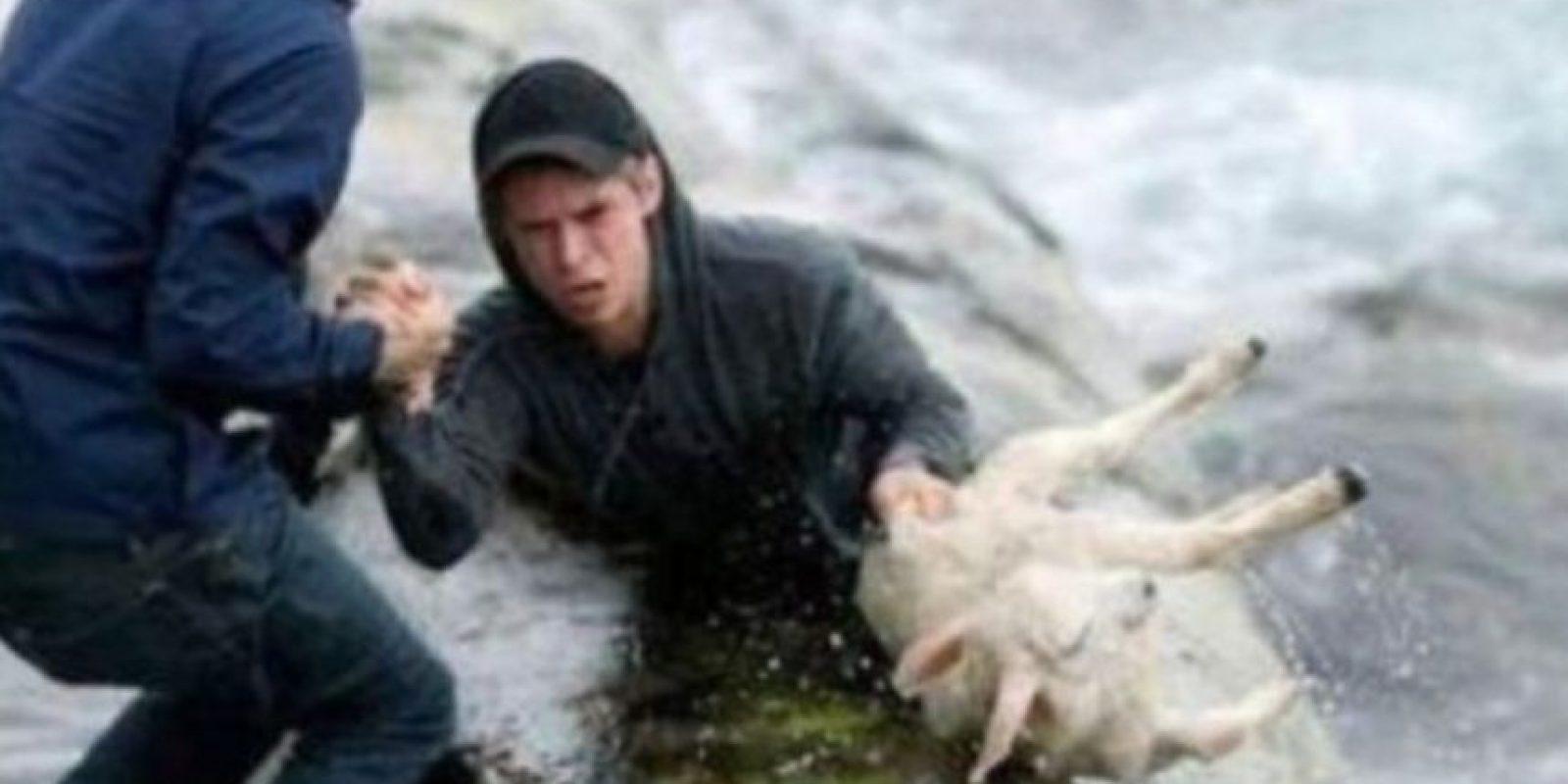 Dos noruegos salvan a una cabra del mar. Foto:Tumblr